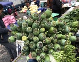 Cây anh túc được bày bán công khai nơi chợ biên giới Lào - Việt