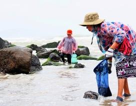Vớt rong biển, người dân làng chài Nam Ô thu nhập tiền triệu mỗi ngày