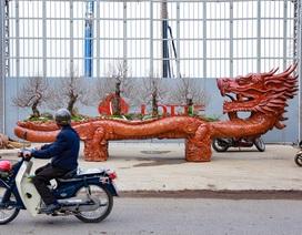 """Chậu đào """"khổng lồ"""" hình rồng ôm núi giá 1 tỷ đồng ở Hà Nội có gì đặc biệt?"""