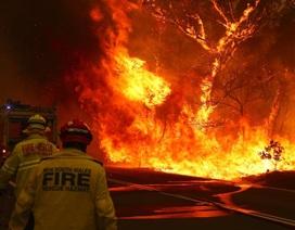 """Australia đón trận mưa """"vàng"""" giữa thảm kịch cháy rừng"""