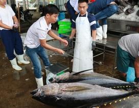 """Ngư dân """"méo mặt"""" vì cá ngừ đại dương khan hiếm mà giá lại thấp"""