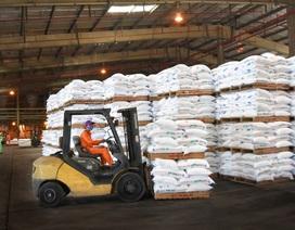 Năm 2019, PVFCCo cung ứng gần 1 triệu tấn phân bón hóa chất