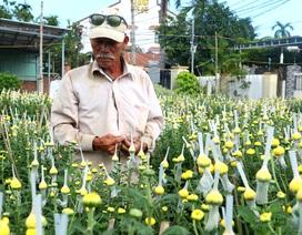 Hội An: Hoa, cây cảnh chơi Tết tăng giá