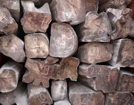 Bắt 50 container gỗ quý nghi nhập lậu từ Châu Phi