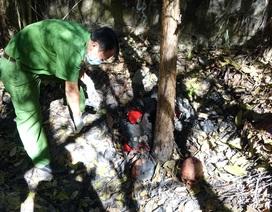 Vụ phát hiện 9 hài cốt ở Tây Ninh: Tưởng gáo dừa nhưng hóa ra sọ người!