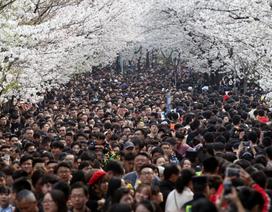 Tỉnh 80 triệu dân tuyên bố chỉ có 17 người nghèo, cả Trung Quốc rung động