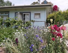 Chiêm ngưỡng khu vườn ngập rau xanh và cây trái của người đàn ông ở New Zealand