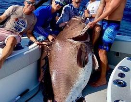 """Bắt được cá mú """"siêu to khổng lồ"""" nặng gần 160 kg"""