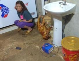 """Nữ chủ quán cấu kết với """"cẩu tặc"""" tiêu thụ hơn 14 tấn thịt chó"""