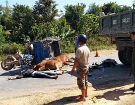 Nam thanh niên tử nạn khi chở bò bằng xe ba gác
