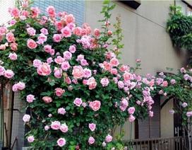 """Ngỡ ngàng với những ban công đầy hoa và cây xanh khiến bạn """"ngắm mãi không chán"""""""