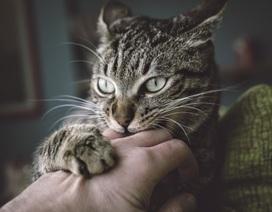 Phát hiện gây sốc: Mèo đột nhập cơ sở nghiên cứu ăn xác người hiến tặng