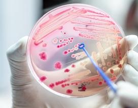 Căn bệnh nhiễm trùng cướp đi mạng sống của nhiều người hơn cả ung thư