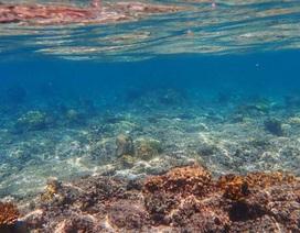 Nhiệt độ đại dương năm 2019 ấm nhất trong lịch sử loài người được ghi nhận