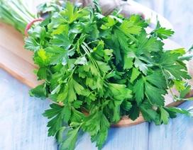 Lợi ích tuyệt vời của rau mùi tây tới sức khỏe
