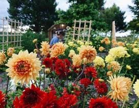 Rời thành phố chật chội, gia đình 5 người chọn sống bên khu vườn tự cung, tự cấp