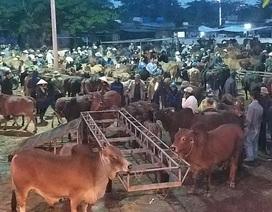 Nhộn nhịp phiên chợ trâu, bò lớn nhất miền Bắc