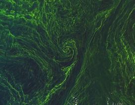 Phát hiện ra nguồn phát thải khí mêtan đáng ngạc nhiên đang ẩn nấp trong các đại dương