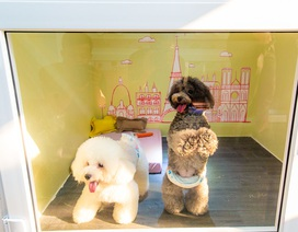 Chi nửa triệu đồng/ngày cho thú cưng đi nghỉ dưỡng ở khách sạn dịp Tết