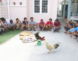 Cận Tết Triệt xóa tụ điểm đá gà ăn tiền, bắt giữ 21 đối tượng