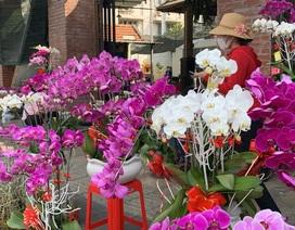 Tiểu thương quyết không giảm giá hoa dù cận Tết