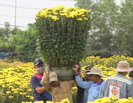 """Phú Yên: Người lao động """"còng lưng"""" kiếm tiền những ngày giáp Tết"""
