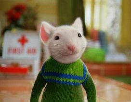Năm Canh Tý, gặp những chú chuột thống trị màn ảnh thế giới
