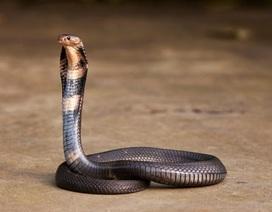 Thủ phạm gây viêm phổi lạ ở Trung Quốc có thể là rắn