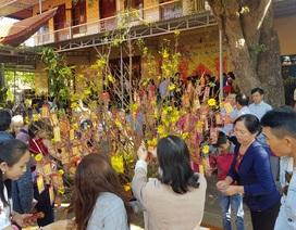 """Dân """"phố núi"""" hân hoan lên chùa hái lộc, cầu may đầu năm"""