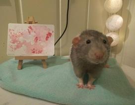 Gặp gỡ chú chuột... họa sĩ
