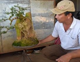 """Gia Lai: Những nghệ nhân phố núi """"thổi hồn"""" vào cây bonsai"""