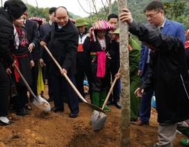 Thủ tướng nhấn mạnh mục tiêu 10 năm của ngành gỗ