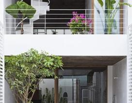 """Nhà ống rộng 4m ở Sài Gòn đẹp ấn tượng nhờ """"trồng cây trong nhà"""""""