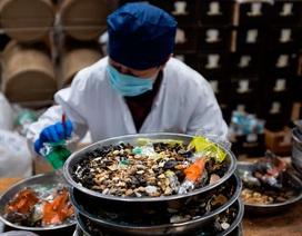 Tranh cãi thuốc thảo dược Trung Quốc có thể tiêu diệt virus corona