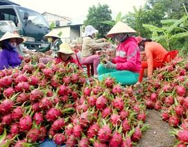 Đại dịch virus corona làm nông sản miền Tây rớt giá thảm hại