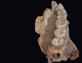 Kết quả nghiên cứu mới cho phép chúng ta xem lại lịch sử của loài người thời kỳ sơ khai