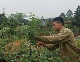 """Bỏ việc ở Hà Nội, 8X Phú Thọ về quê trồng vườn hoa hồng """"khủng"""""""