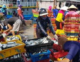 """Quảng Trị: Ngư dân thu gần trăm triệu đồng nhờ trúng """"lộc biển"""" đầu năm"""