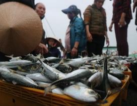 Vươn khơi ngày Rằm tháng Giêng, ngư dân trúng lộc biển