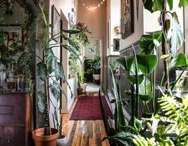 """Bất ngờ ngôi nhà trồng 300 loại cây, đẹp chẳng kém """"rừng Amazon thu nhỏ"""""""