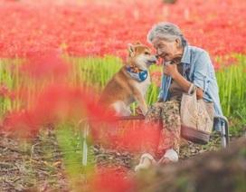 """Gác lại căng thẳng để nhìn ngắm cuộc sống yên bình của """"bà cụ và cún cưng"""""""