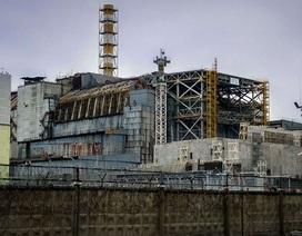 Nấm ăn bức xạ được tìm thấy trong lò phản ứng hạt nhân Chernobyl