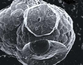 Cuộc sống trong băng đá dễ cháy giúp tìm sự sống trên các hành tinh khác?