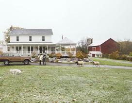 Cặp vợ chồng dành 3 năm xây ngôi nhà trong mơ, sống cùng thú cưng