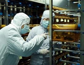 Số người chết tăng vọt, thế giới cấp tập tìm vắc xin chống dịch corona