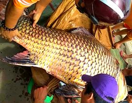 """Cá hô """"khủng"""" nặng 111kg được bày bán ở An Giang"""