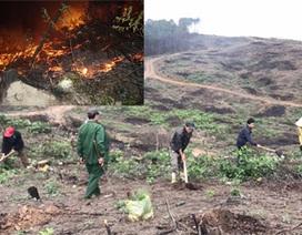 Phủ xanh hơn 35 ha rừng sau vụ cháy rừng kinh hoàng