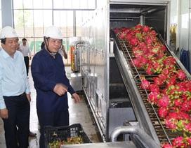 Xuất khẩu thanh long đình trệ, Bộ trưởng Nông nghiệp về địa phương giải cứu