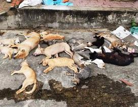 1 đêm đánh bả, 2 anh em ruột trộm gần chục con chó, mèo