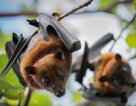 Buôn bán thịt thú rừng: Phải đóng cửa vĩnh viễn và cấm tuyệt đối
